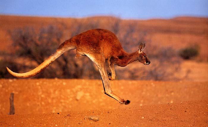 охлаждающая животные в тропической пустыне австралии аванс: термины